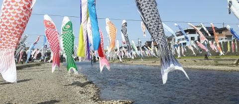 Koi banners
