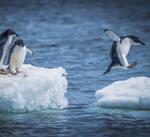 Beyond Market Research Event featured image with penguin leaping